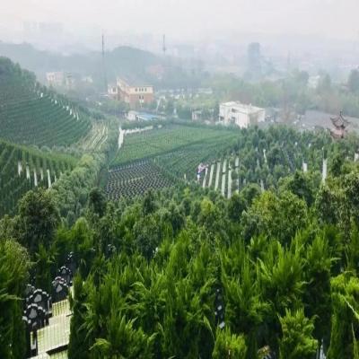 瓶窑公墓天寿园艺术墓